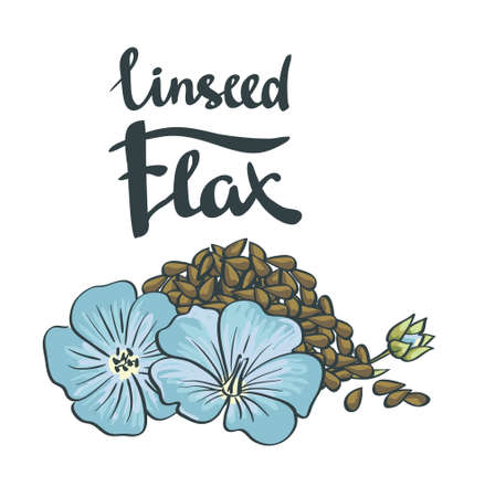 flax seed: Flax Seeds with flowers. Vector illustration