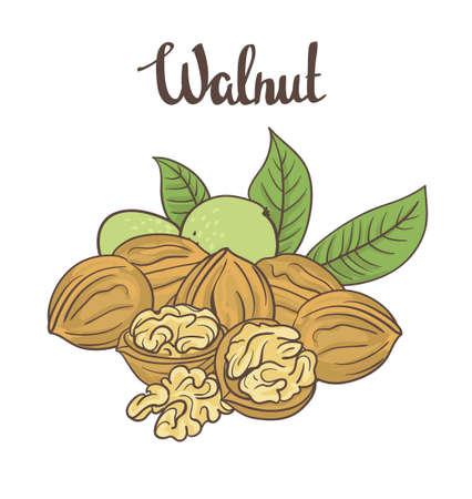 Walnuts isolated on white background. Cartoon label.