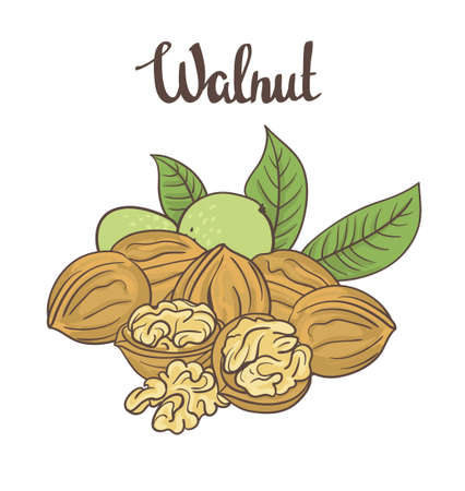 Walnuts isolated on white background. Cartoon label.