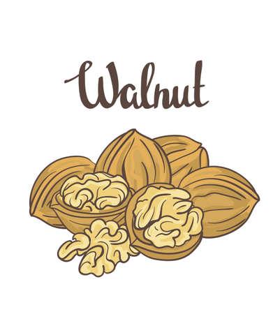 hard crust: Walnuts isolated on white background. Cartoon label.