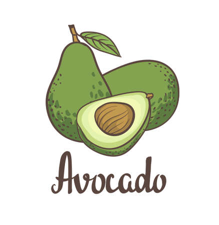 Avocado, half of avocado, avocado seed  painting isolated on white background. illustration of fruit avocado