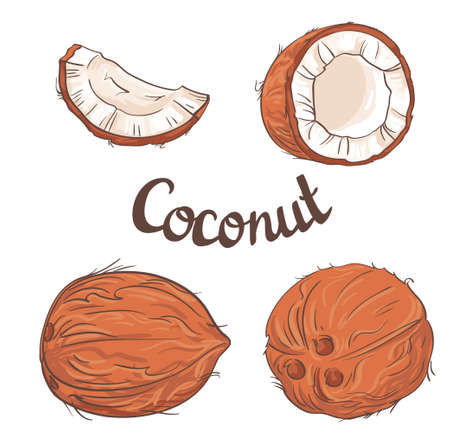 pulp: Coconut set - the whole nut,  a coco segment and pulp of a coco.