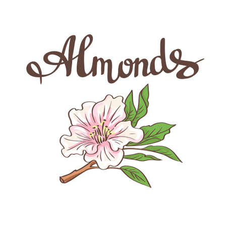 Almond flower. hand drawn illustration