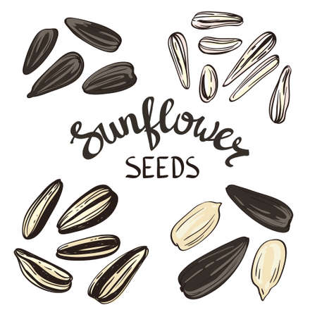 Set of Sunflower seeds with Vintage Stylized Lettering. Vector hand drawn Illustration.