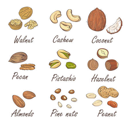 pecan: Vector set of hand sketched nuts on white background in hand drawn style: hazelnut, almonds, peanuts, walnut, cashew, pine nut, pistachios, coconut, pecan. Illustration