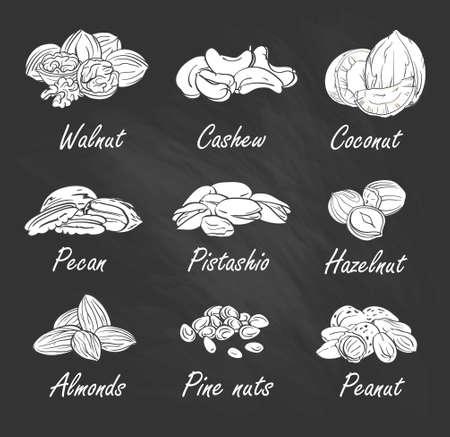 pistachios: Vector set of hand sketched nuts on chalkboard in hand drawn style: hazelnut, almonds, peanuts, walnut, cashew, pine nut, pistachios, coconut, pecan.