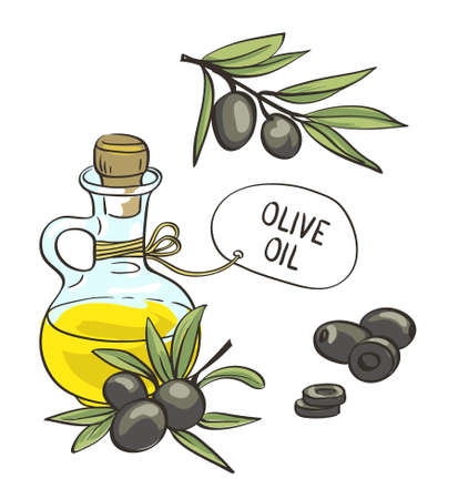 Bottle with olive oil. Vector isolated objects. Hand drawn olive branches. Illustration
