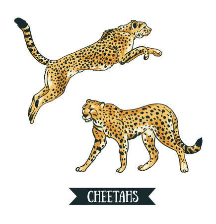 Ilustracja wektorowa z lampartem / gepardem. Skaczące zwierzę. Ręcznie rysowane obiekty na białym tle na białym tle.