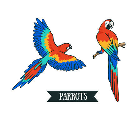 Ara parrot Isolated vector tropical design element. Tropical birds on the white background.