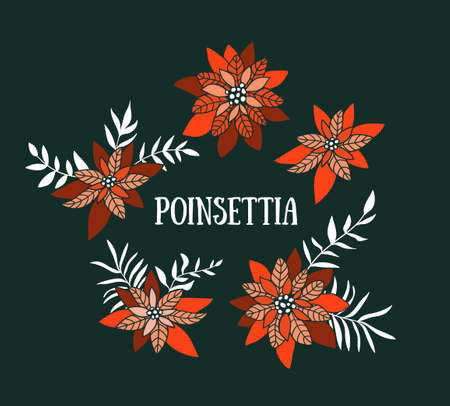 Dark background with poinsettias. Vector illustration. Xmas flowers in hand drawn style.Christmas design elements for greeting card. 일러스트