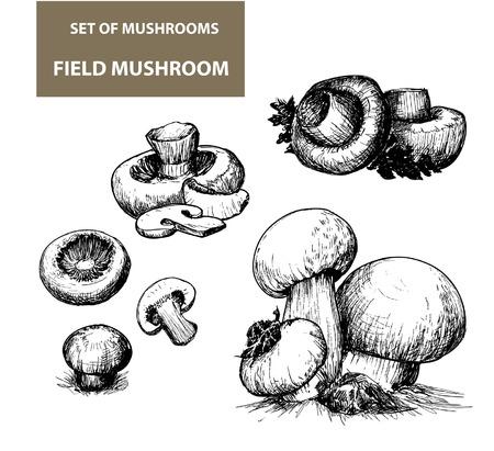 Set of vector images of mushrooms Stock Illustratie