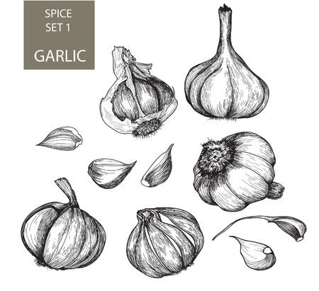 Set of vector images of garlilc Stock Illustratie