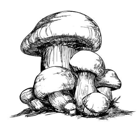 mycelium:  Mycelium  Vector mushrooms, hand drawing