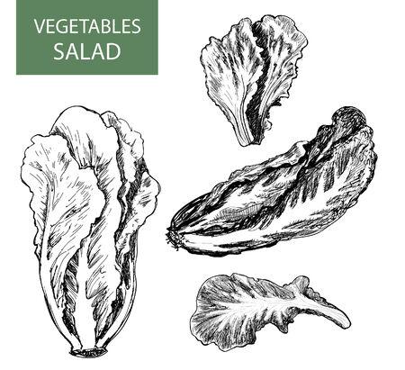Salade - set van vector illustratie - hand tekenen Stock Illustratie