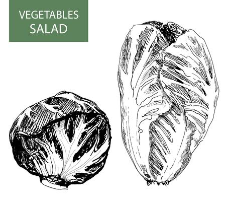 Salad - set of vector illustration - hand drawing