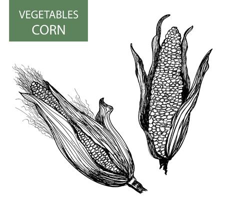 planta de maiz: Corn-conjunto de ilustración vectorial