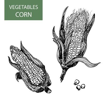 engraved: Corn-set of vector illustration Illustration