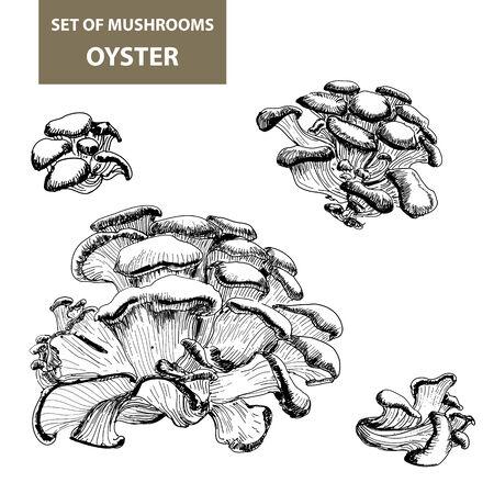 gill: Set of mushrooms. Oyster mushrooms.