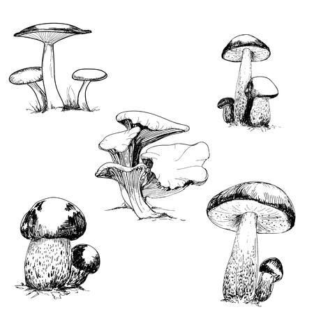 Set of wild mushrooms. Hand drawn illustrations
