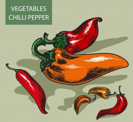 peper: Pepper. Hand drawn illustrations Illustration
