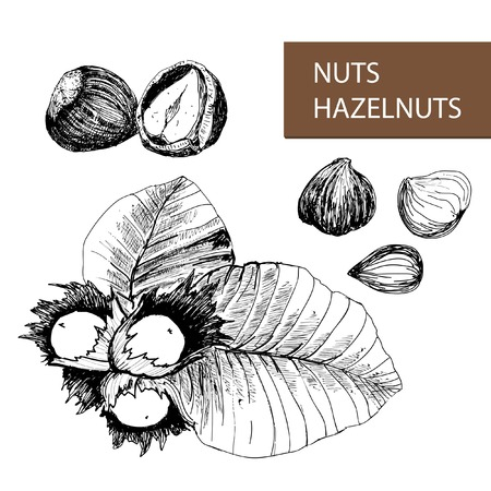 nutty: Nuts. Hazelnuts. Set of hand drawn illustrations.