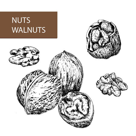 nutty: Nuts. Walnuts. Set of hand drawn illustrations.