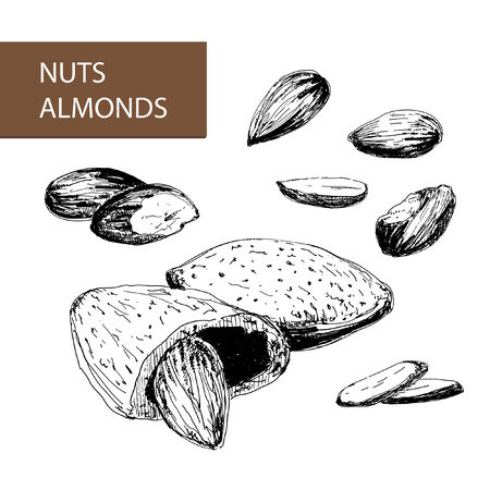 Nuts. Almonds. Set of hand drawn illustrations.