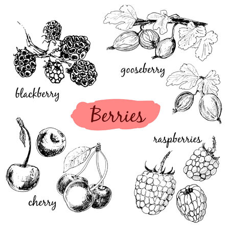 Berries. Set of hand drawn illustrations Vector