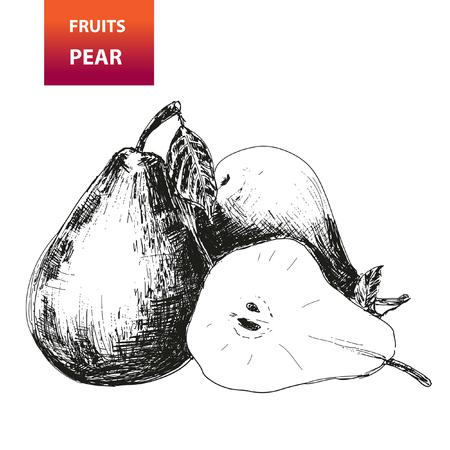 Fruits  Pear  Hand drawn illustration Vector