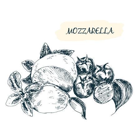 mozzarella cheese: Mozzarella. Hand drawn illustration. Grahpic still life Illustration