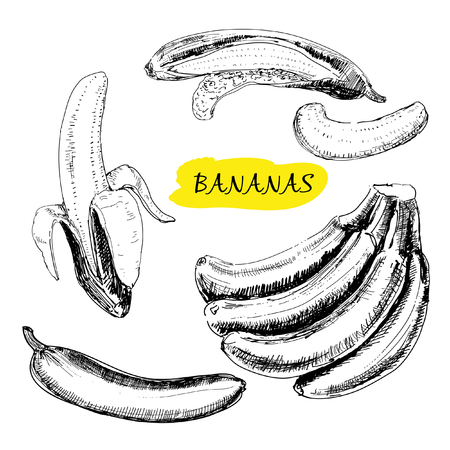 exotic fruit: Bananas. Set of hand drawn graphic illustrations