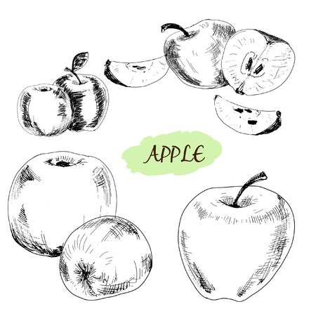 encyclopedias: Apple. Set of hand drawn graphic illustrations. Illustration