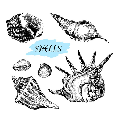 Seashells. Set of hand drawn graphic illustrations Vector