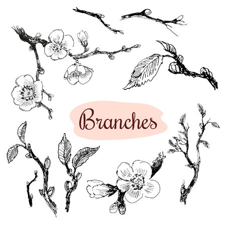 outline flower: Branches  Set of hand drawn graphic illustrations