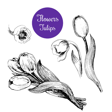 ink pen: Tulips  Set of hand drawn graphic illustrations