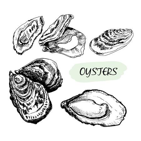 ostra: Ostras Conjunto de ilustraciones dibujadas a mano gr�fico Vectores