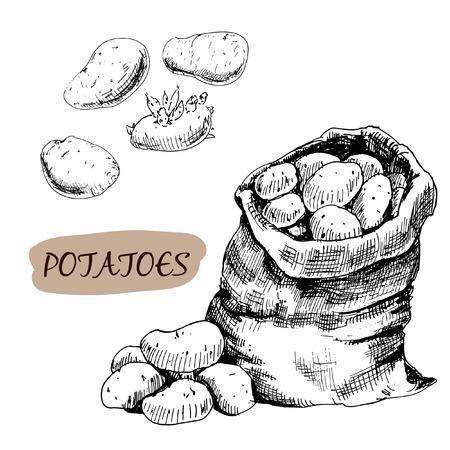 Potatos  Set of graphic hand drawn illustrations