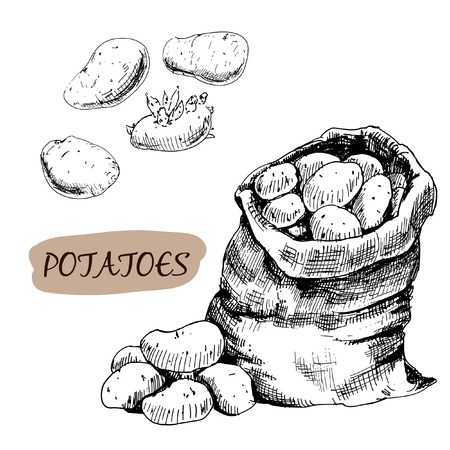 root vegetables: Potatos  Set of graphic hand drawn illustrations