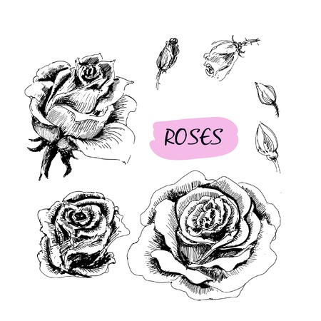 Roses  Set of graphic hand drawn illustrations