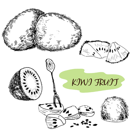 fruitful: Kiwi fruit. Set of hand drawn illustration Illustration