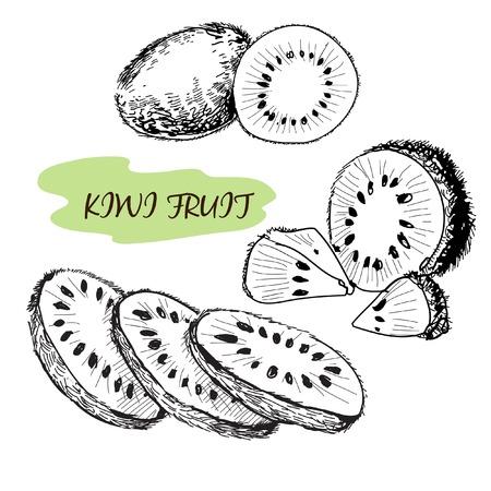 kiwi fruit: Kiwi. Conjunto de dibujado a mano ilustraci�n Vectores