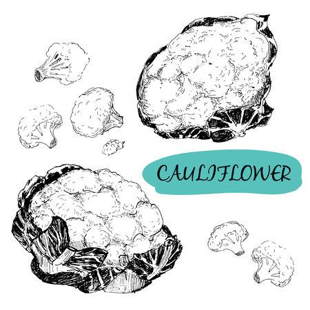 Cauliflower. Set of hand drawn graphic illustrations Vector