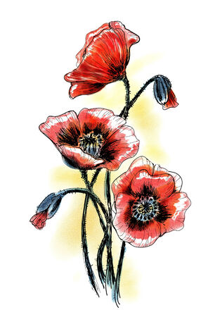 oldened: Poppies. Summer flowers. Hand drawn watercolor illustration.