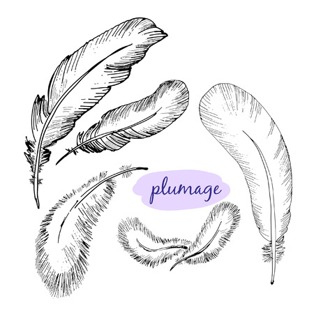 plumage:  set of sketch plumage. Hand drawn illustrations.