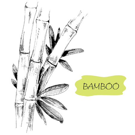 rice plant: Bamboo. Stems and leaves. Hand drawn graphic illustration.