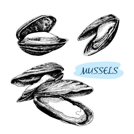 ムール貝。手描きのグラフィック イラストのセットです。  イラスト・ベクター素材