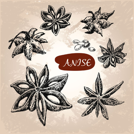 brownish: Anise. Set of hand drawn graphic illustrations Illustration