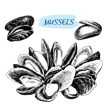 Mussels. Set of hand drawn graphic illustrations.