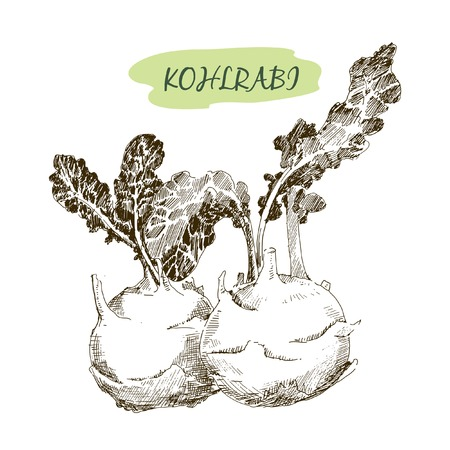 Kohlraby Vector
