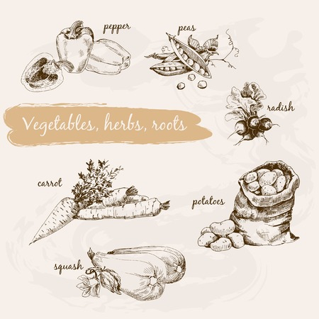 herb garden: Vegetables, herb and roots. Hand drawn cooking set